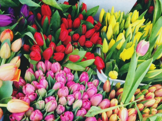 tulips at the market - a sure sign spring is around the corner